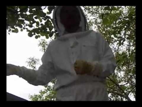 فاش شدن اسرار عسل
